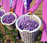 ACCI Says There is an Urgent Need to Boost Saffron Sector