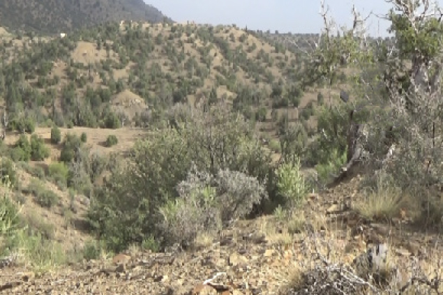 Paktika Police Cutting  Down Pine Nut Trees: Residents
