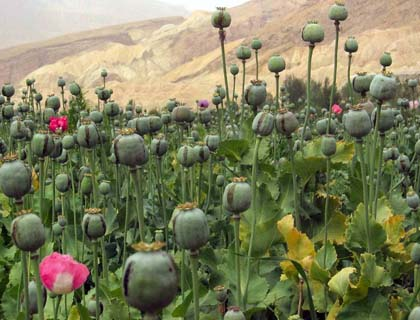 Opium Production and Trade Aggravate a Simmering Social Crisis